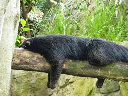 image from bills-log.blogspot.com
