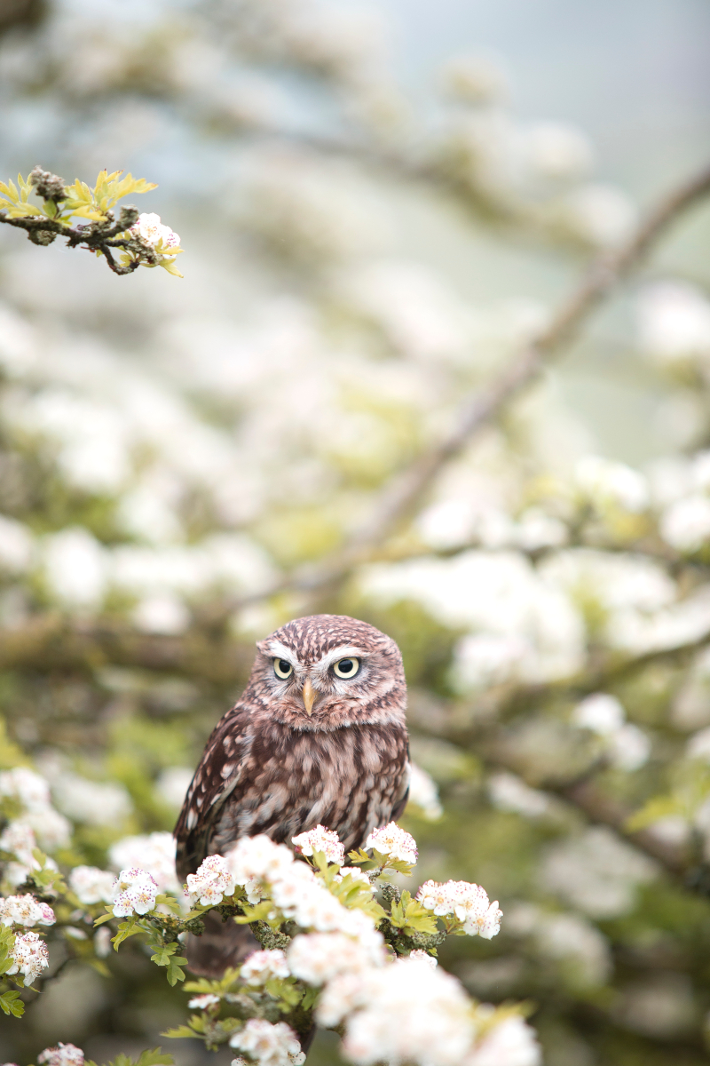Owl andy-chilton-104266-unsplash