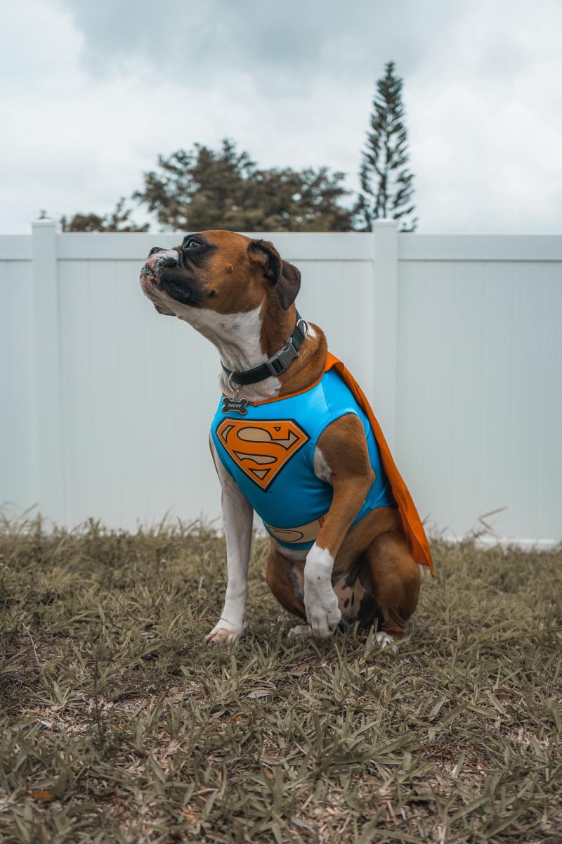 Dog costume elias-castillo-747678-unsplash