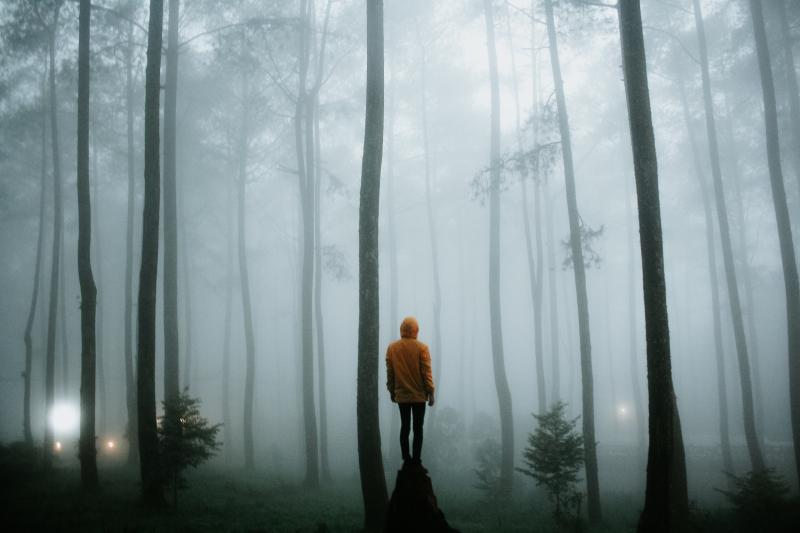 In the woods ramdan-authentic-679682-unsplash