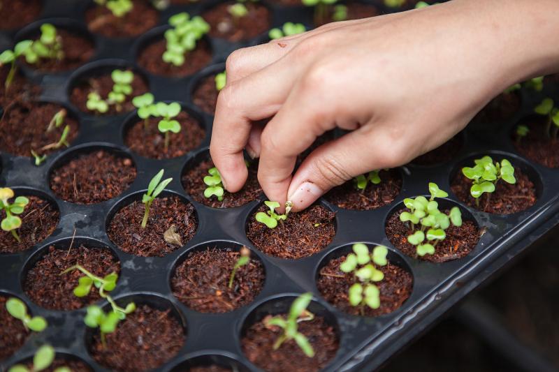 Planting joshua-lanzarini-727350-unsplash