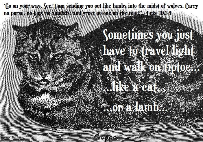 Cat or lamb