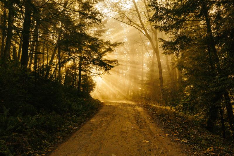Path patrick-fore-41134-unsplash