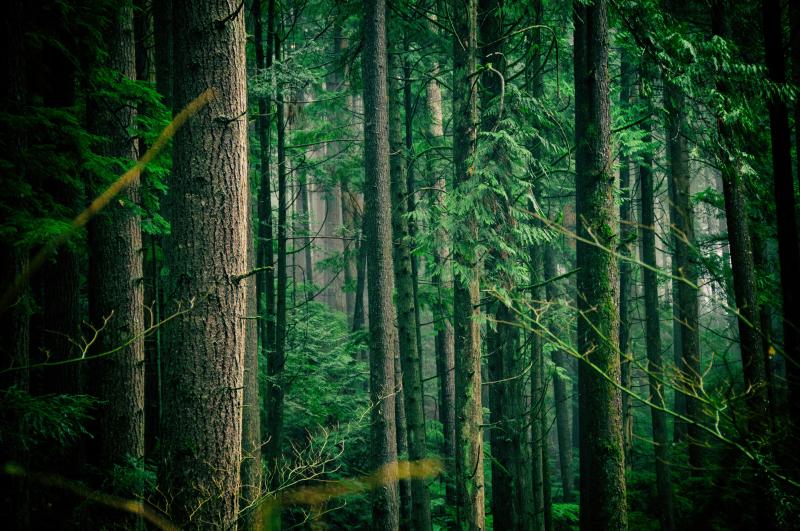 Trees jachan-devol-525025-unsplash