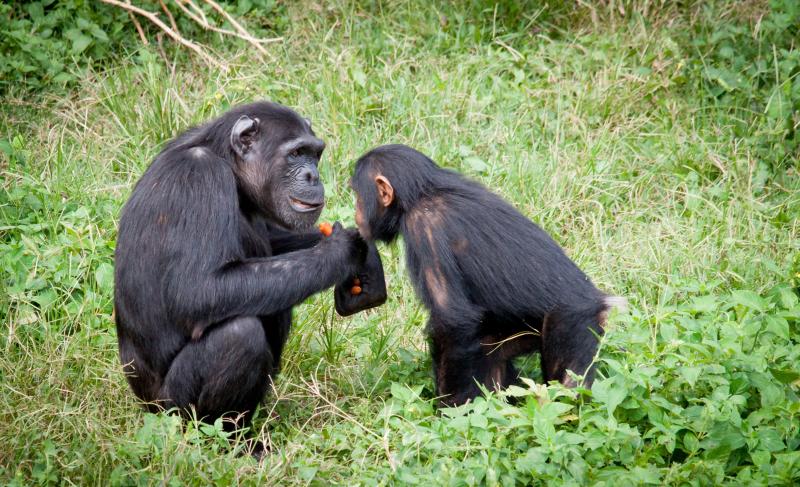 Ape conversation bill-wegener-iGiGw802P8k-unsplash