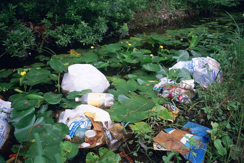 Litter_and_garbage_dumped_in_wetland_area_among_water_lilies_and_marsh_plants
