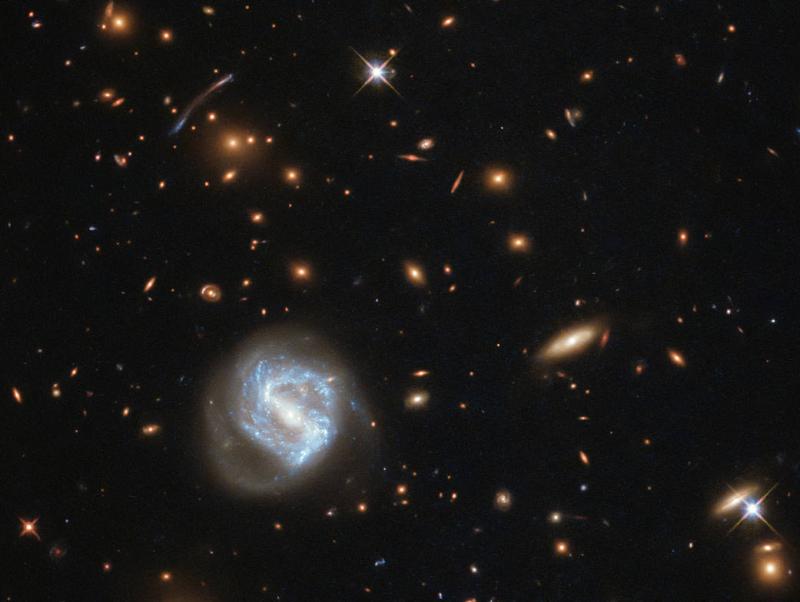 Galaxy cluster cornucopia