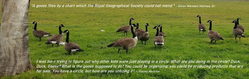 Geese organization